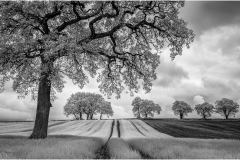 Contrasts-by-Dave-Jones